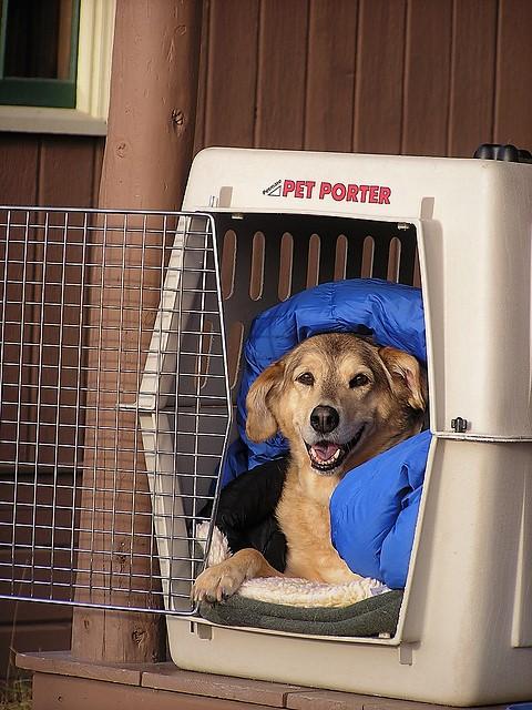 Transport Your Dog