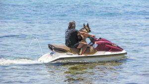 jet ski with a dog