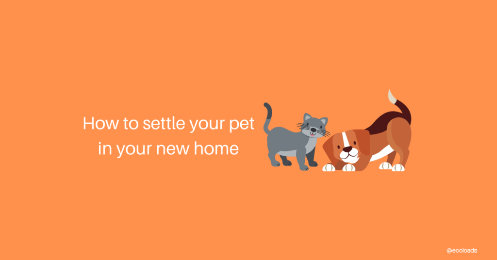 how to settle your pet into your new home. Ecoloads professional removalists