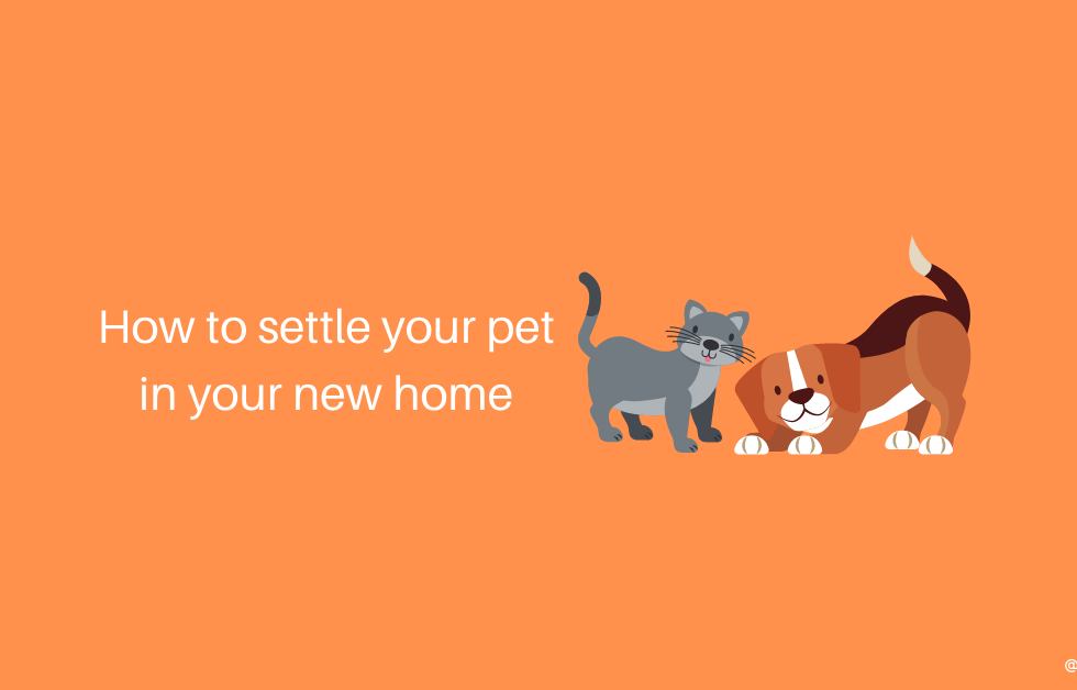 settle your pet in your new home Ecoloads professional removalists