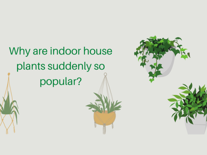 why are indoor house plants suddenly so popular?