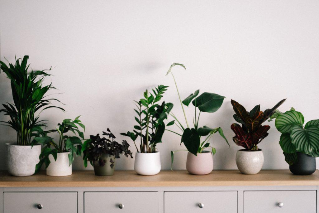 indoor houseplants instagram trend
